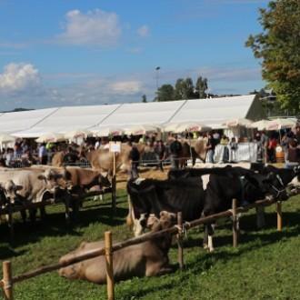 Schauabend Viehschau Häggeschwil ab 19.30Uhr